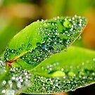 Natures Water Droplets by Derek McMorrine