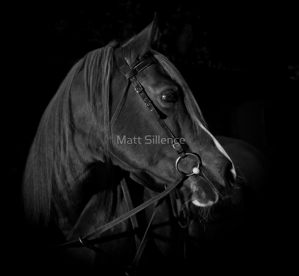 What a beauty - Black Beauty by Matt Sillence
