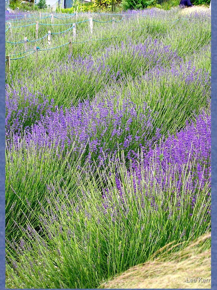 Rows of Lavender by leekier