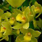 Orkidé - Orquídea - Orchid - Orchidee - Orchidée by Patje