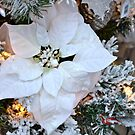 Christmas in White... by Carol Clifford