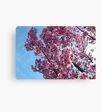 Blossoms up Close 4 Canvas Print