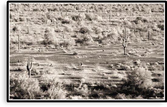 cactus desert arizona by HanselASolera
