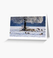 THE OAK CANOPY Greeting Card