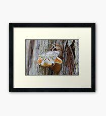 Cicada hatching Framed Print