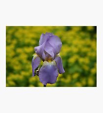 single iris Photographic Print