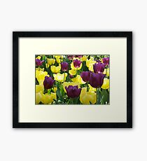 Tulips, Pittsburgh in Spring Framed Print