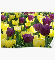 Tulips, Pittsburgh in Spring Poster