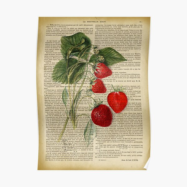 Botanical print, on old book page - strawberry Poster
