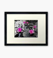 Pink Lotus Pool Framed Print
