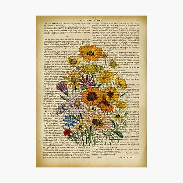 Botanical print, on old book page - Garden flowers Photographic Print