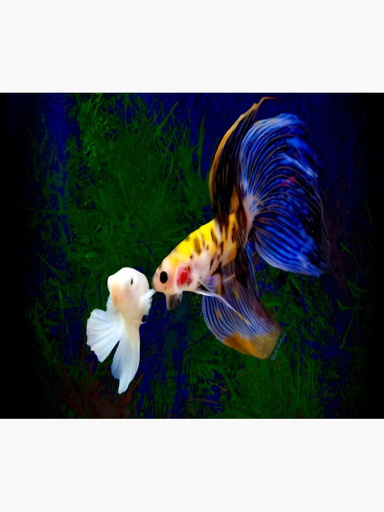 Blanco hembra y amarillo caramelo macho Betta Fish de Digital-designs