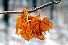 After the Freezing Rain 3 - Leaves by Debbie Pinard