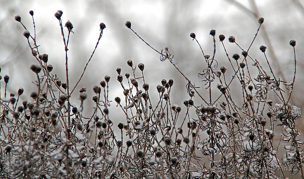 After the Freezing Rain 3 - Dead Flowers by Debbie Pinard