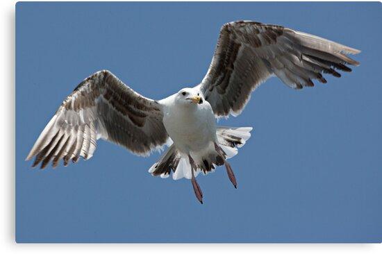 Inbound Sea Gull by Michael  Moss
