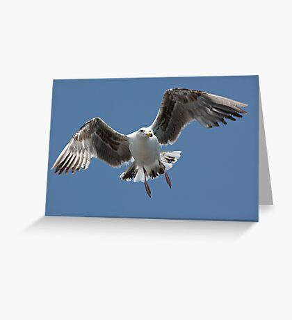 Inbound Sea Gull Greeting Card