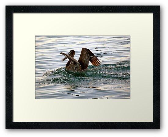 Brown Pelican Sunset Landing by Michael  Moss