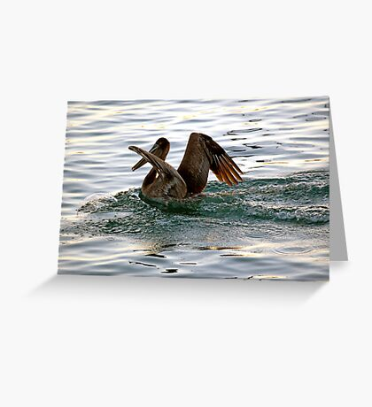 Brown Pelican Sunset Landing Greeting Card