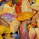 Leaves by Kathleen Jones
