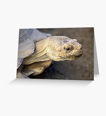 Sulcata Tortoise Greeting Card