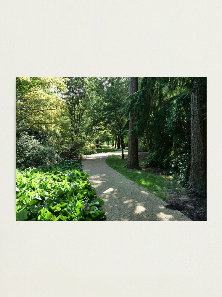 Alternate view of Garden path looks beautiful in sunlight Photographic Print