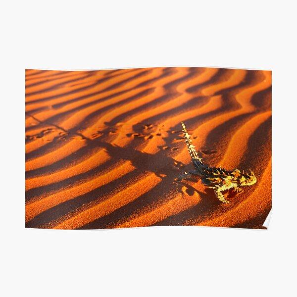Thorny Devil, Simpson Desert Poster