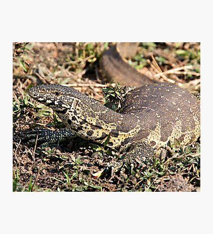 Nile Water Monitor Photographic Print