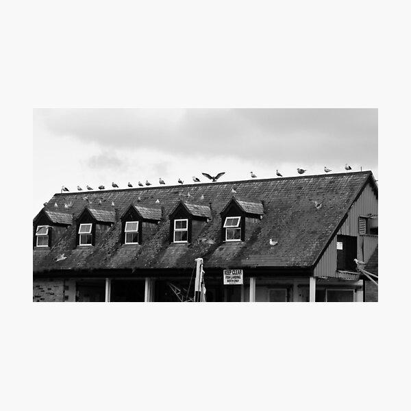 Gull Angel Photographic Print