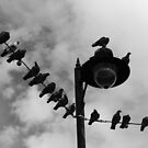 Pigeon Parade by LockwoodEcho