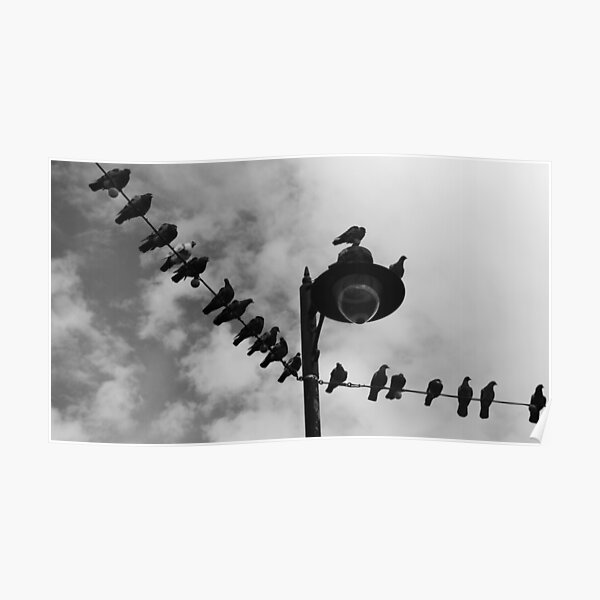 Pigeon Parade Poster