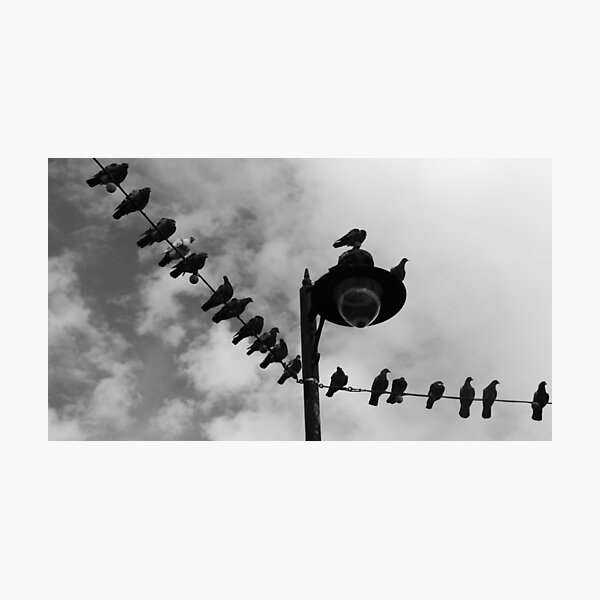 Pigeon Parade Photographic Print
