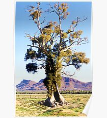 The Spirit of Endurance, The Cazneaux Tree Poster