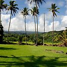 Coconuts at the Keanae Church by ZIGSPHOTOGRAPHY