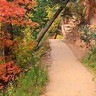 Autumn Trail by Nickolay Stanev