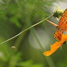 Butterfly by Mahmud Fahmi
