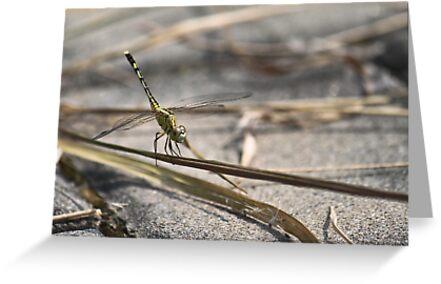 Fire Dragonfly by Mahmud Fahmi