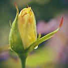 Yellow Friendship rosebud by samhicks
