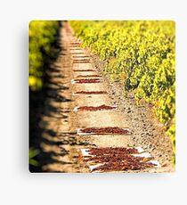 In the vineyards Metal Print