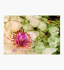 Immersed Photographic Print