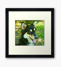 Portrait of Rosie, a Shelter Puppy Framed Print