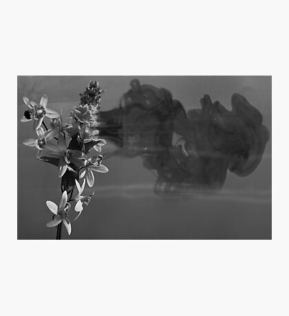 Fragrance Of Grayness Photographic Print