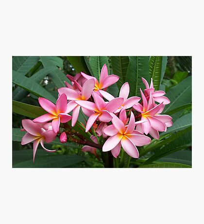 Wonderful pink flowers Photographic Print