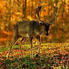 Woodland sunset by Alan Mattison