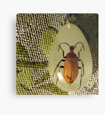 bug pendant on pashmina Metal Print
