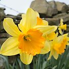 Spring Arrives! by LazloWoodbine