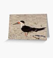 Black Skimmer Greeting Card