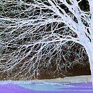 Image transform - invert - 1 by bubblehex08