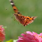 Flutter By by Jennifer Ferry