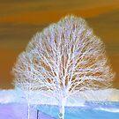Image transform - invert - 2 by bubblehex08