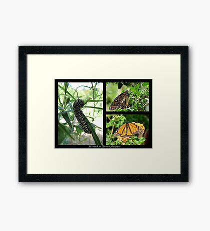 Butterfly Collage ~ Monarch Framed Print